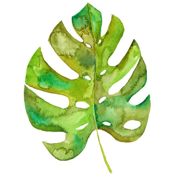 Split Leaf Philodendron Watercolor Art Tropical Leaf Painting