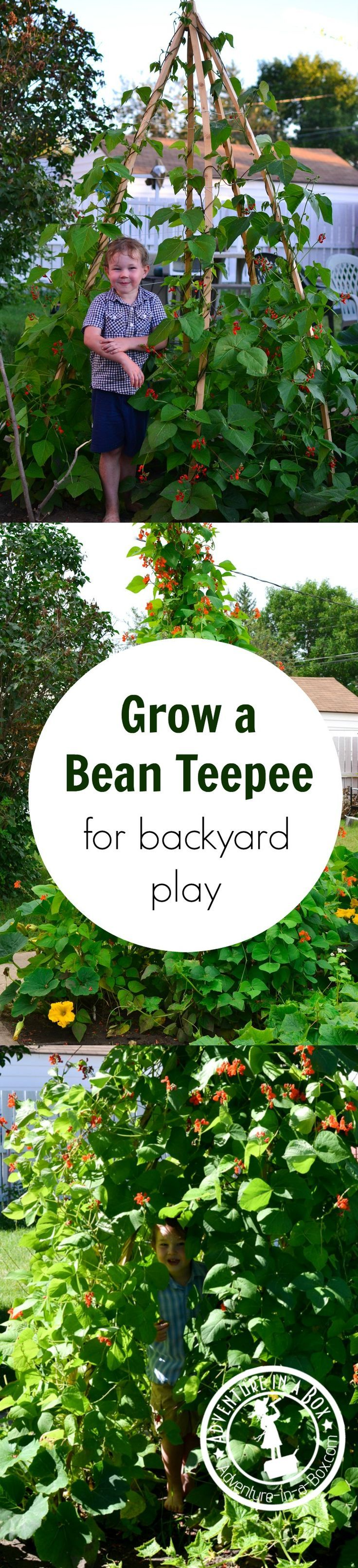 How to Make a Bean Teepee for Backyard Play | Garden ...