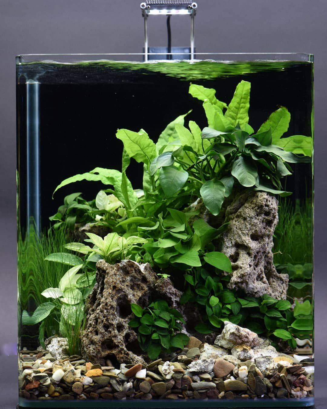 Dennerle On Instagram Nice 30l Nano Cube Scaped By Volker Jochum Follow Us Facebook Facebo Betta Aquarium Aquarium Landscape Aquascape Aquarium