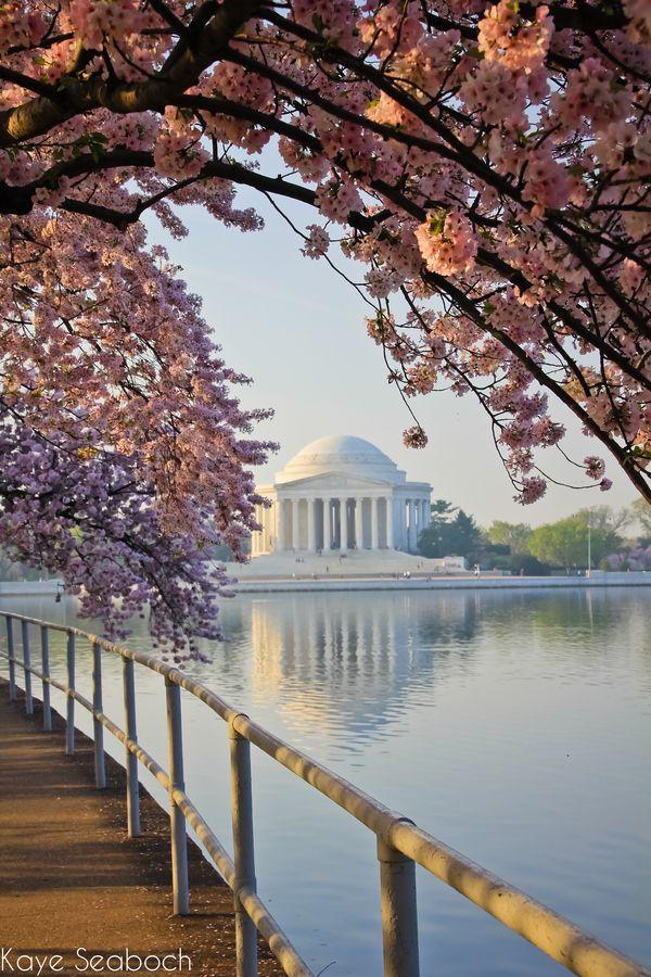 Jefferson Memorial Cherry Blossoms Washington Dc Travel Dc Travel Jefferson Memorial