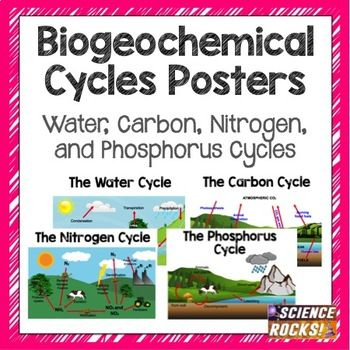 Biogeochemical Cycles Poster Project Examples