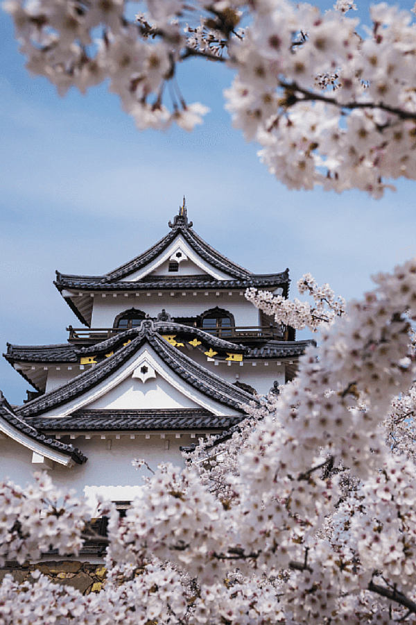 Travel Japan Itinerary Key: 2115325669 #JapanTravelPictures
