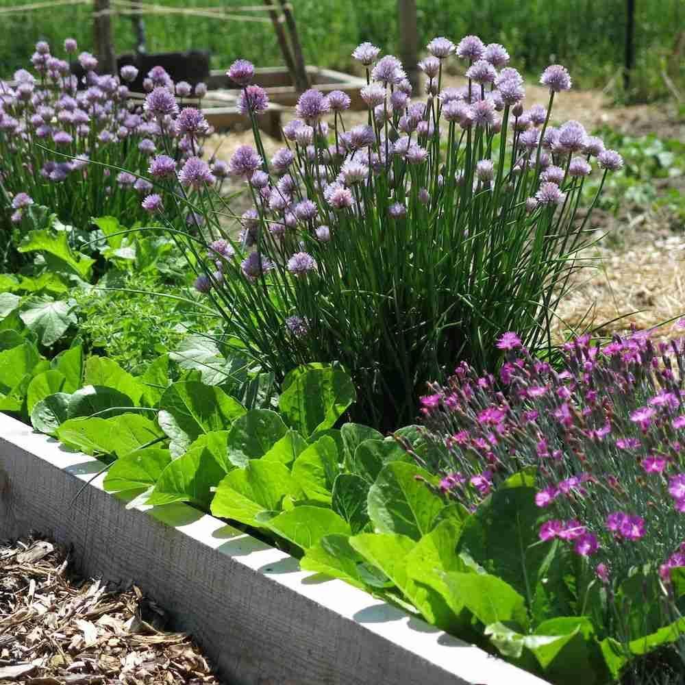 Gemuse Und Obst Fur Die Gartengestaltung Verwenden Beim Foodscaping Garten Pflanzen Gartengestaltung Diy Krautergarten