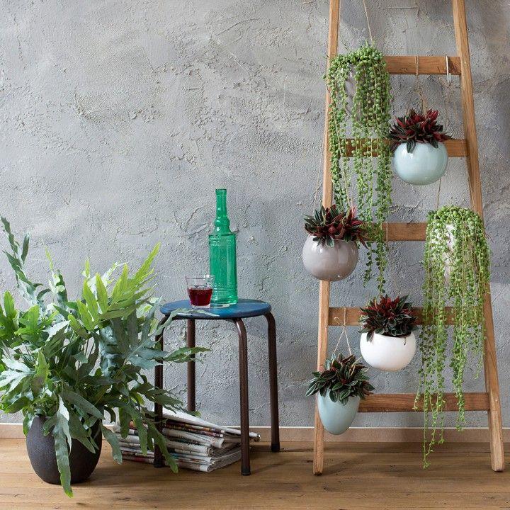 Hanging Basket Intratuin.Style Je Muur Met Groen Intratuin Herfst Woonkamer Idee
