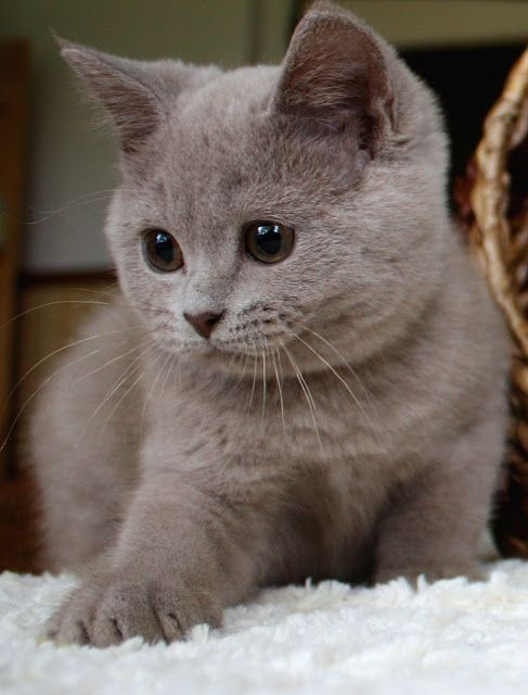 65 Baby Animals That Can Fill Your Heart With Joy Animals Baby Burnfatworkout Cutestanimals Cu In 2020 Baby Animals Baby Animals Funny Cute Cats And Kittens