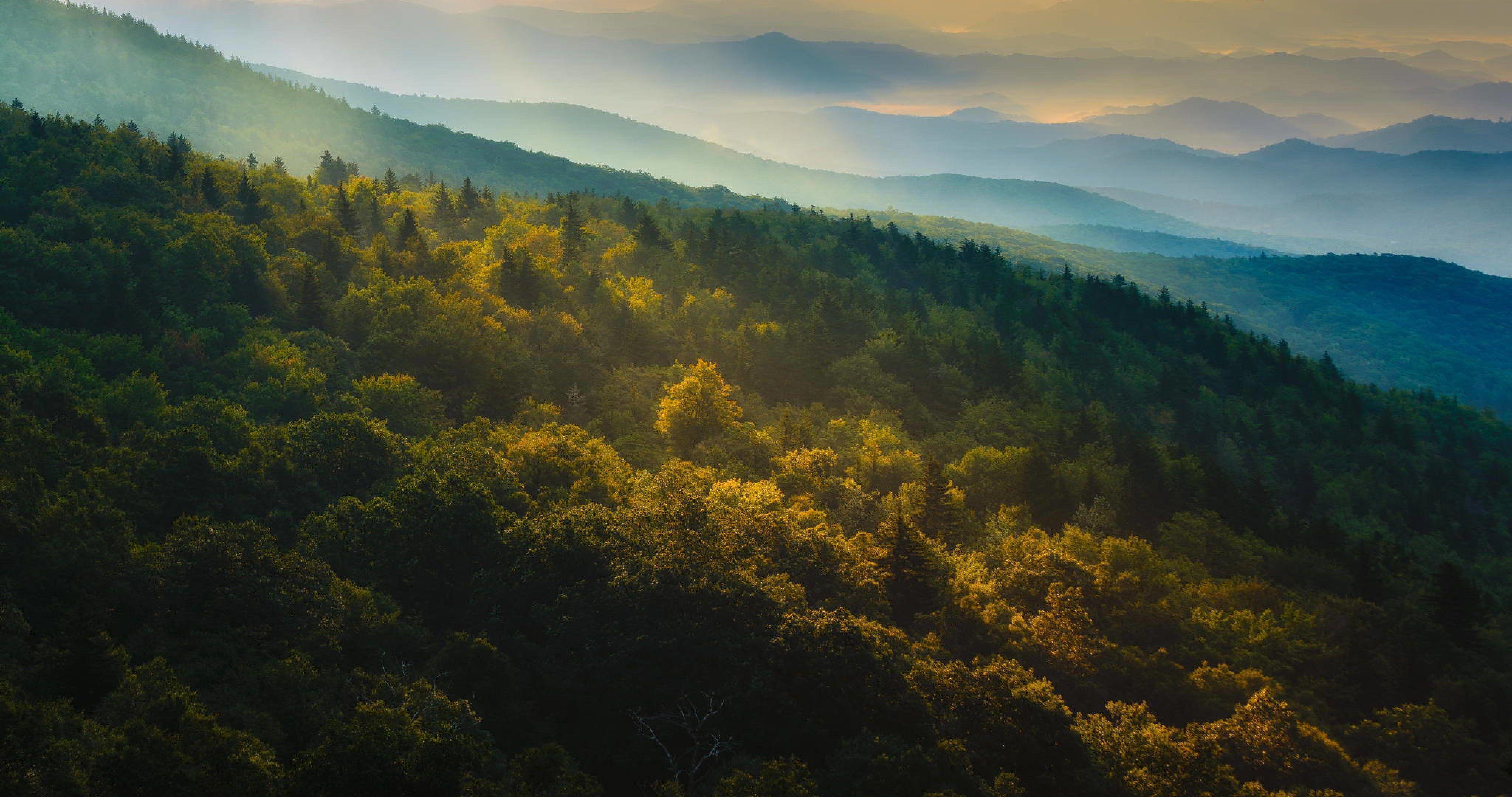Autumn Panoramma Forest Wallpaper 4k Ultra Hd Wallpaper