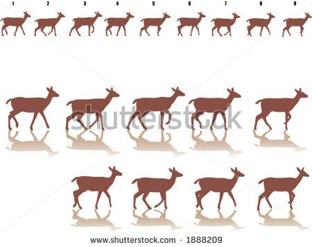 frame by frame of a walking deer - stock vector | Animation Cycles ...