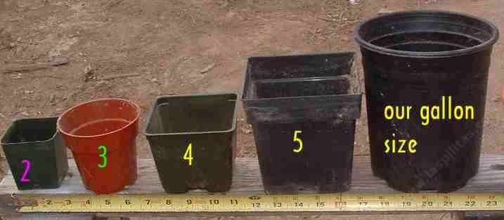 Nursery Container Sizes From 2 Inch Pot Liner 3 4 5 Through A Gallon Grid24 24 Native Plants Container Size Patio Pots