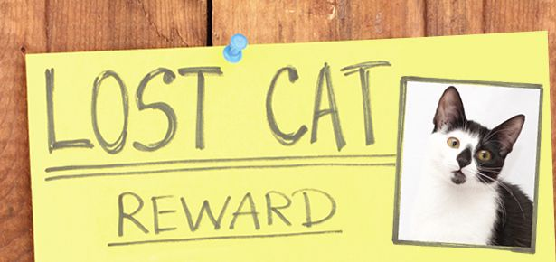 Missing Modern Cat Lost Cat Cat Holidays Modern Cat