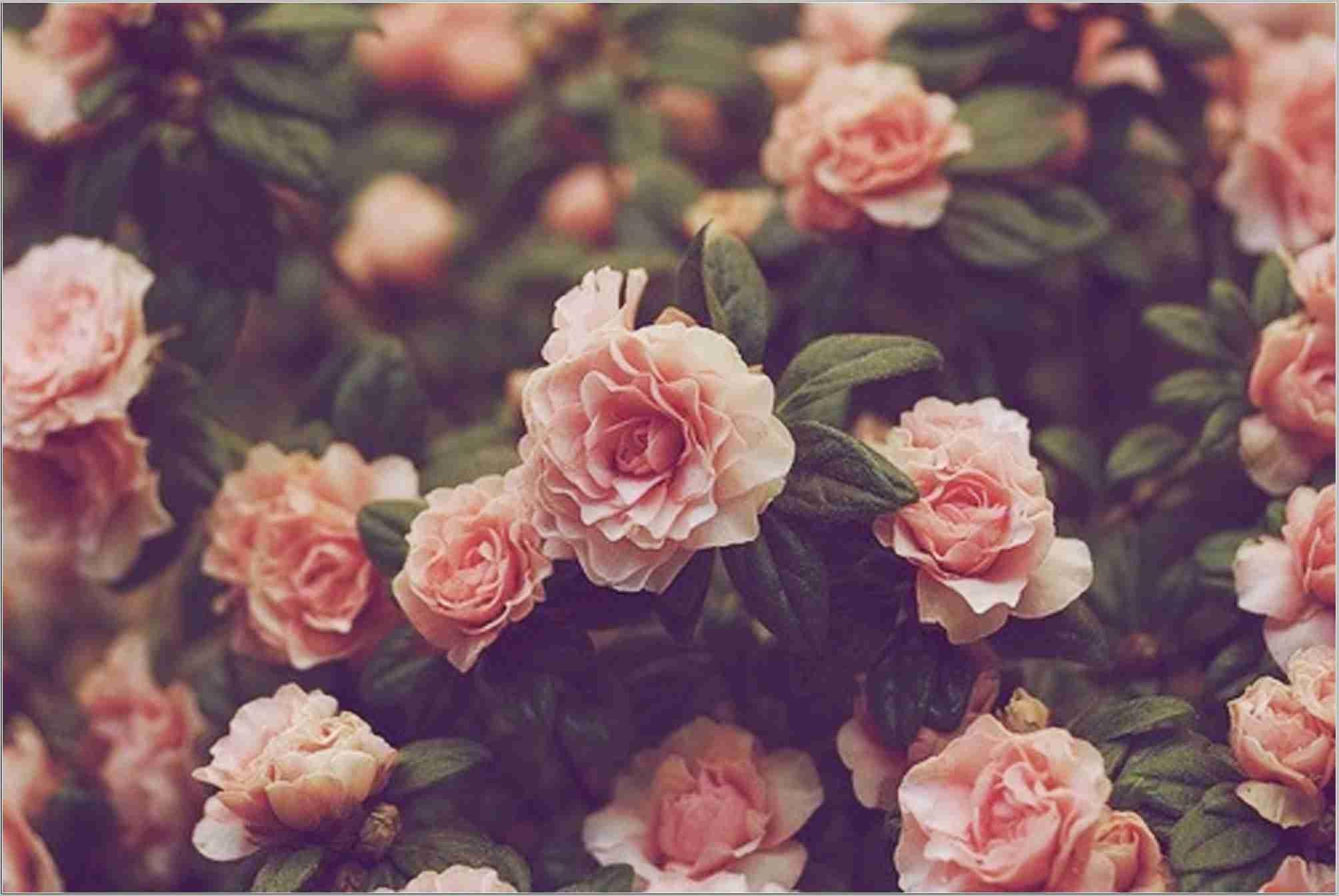 Hd Iphone Wallpapers Flowers Flower Flowers Wallpaper Wallpapers Vintage Flowers Wallpaper Vintage Flower Backgrounds Flower Backgrounds