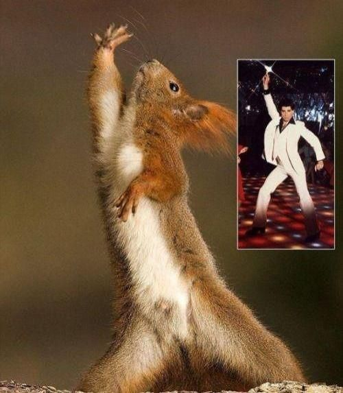 Squirrel – Disco King