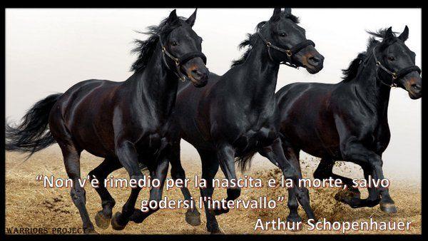 Non vi è rimedio per la nascita o la morte, salvo godersi l'intervallo.  Arthur Schopenhauer  Warriors' Project (@Warriors_Parma) | Twitter