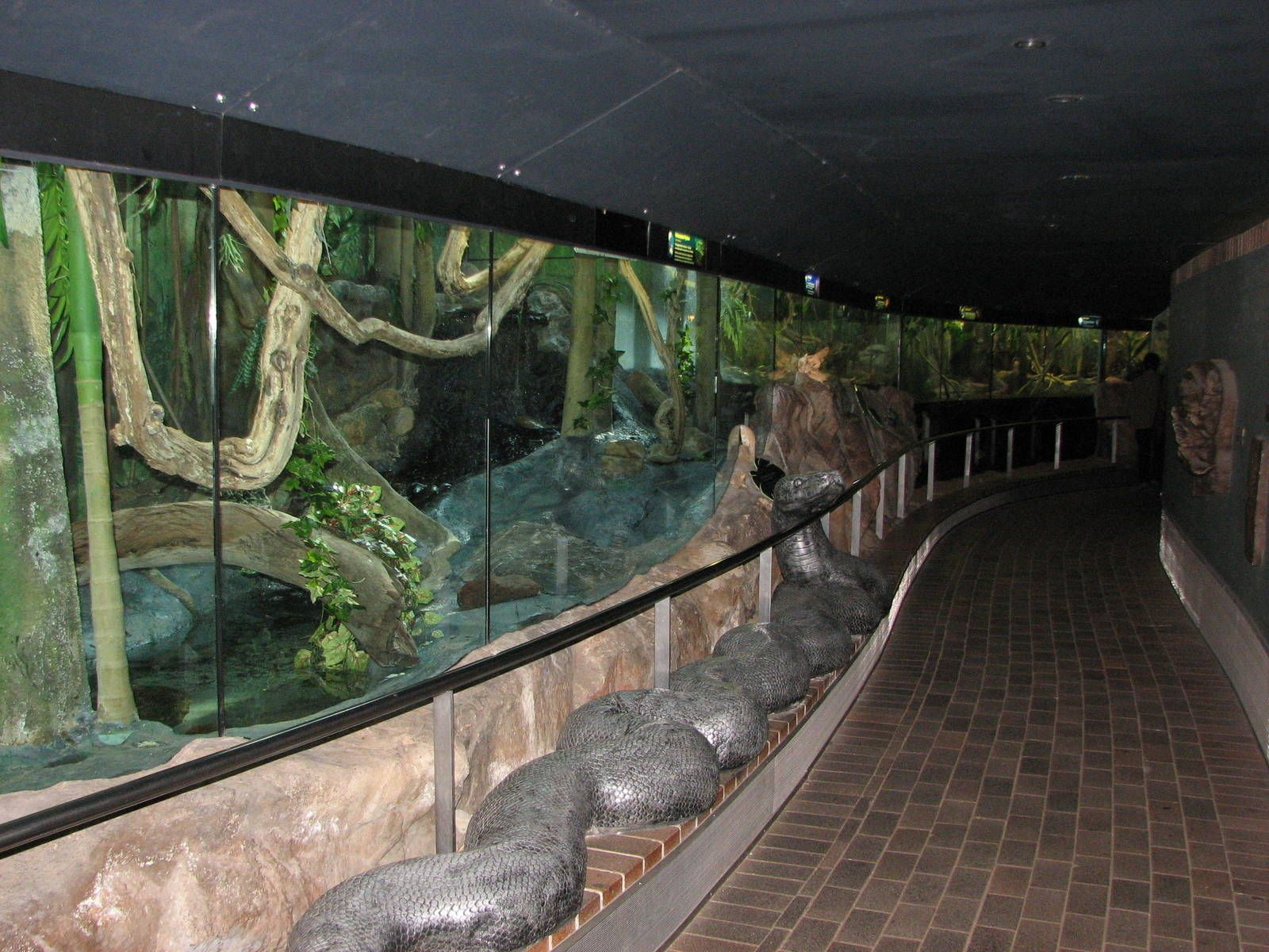San Diego Zoo Reptile House Google Search Zoos