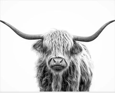 Highland Cow Calf Scottish Nature Black /& White Quality Canvas Print A3