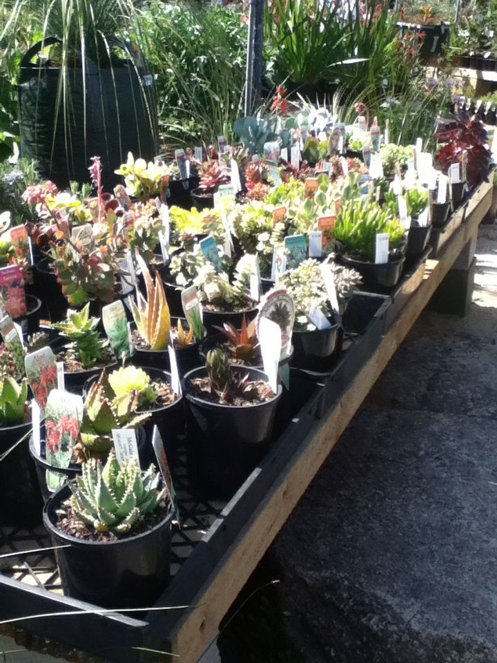 Cute succulents and cacti at a nursery ~my photography~
