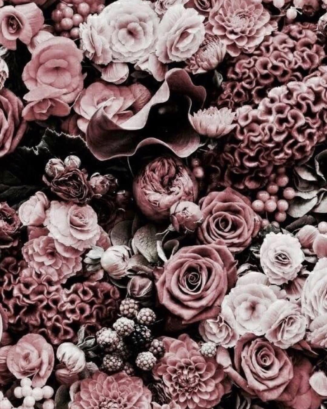Pinterest Julia Golovin Trendy Flowers Pink Flowers