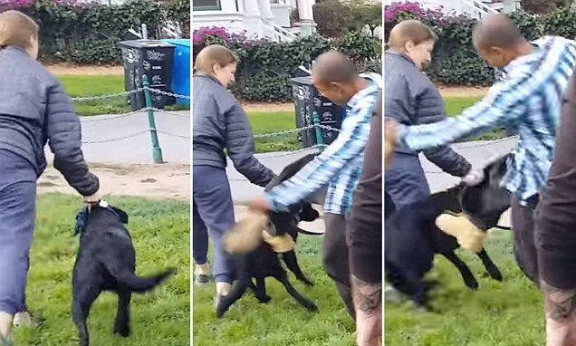 008 Shocking moment basset hound owner boots a Lab in San