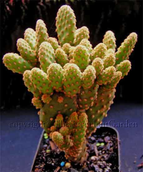 Online Nursery Specialising In Succulent Plants