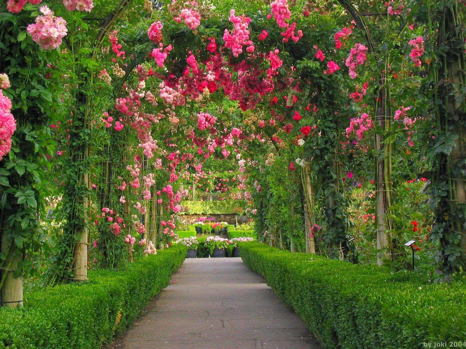 Rose Flower Garden Pictures 5 Summer Flowers Garden Garden Pictures Beautiful Gardens