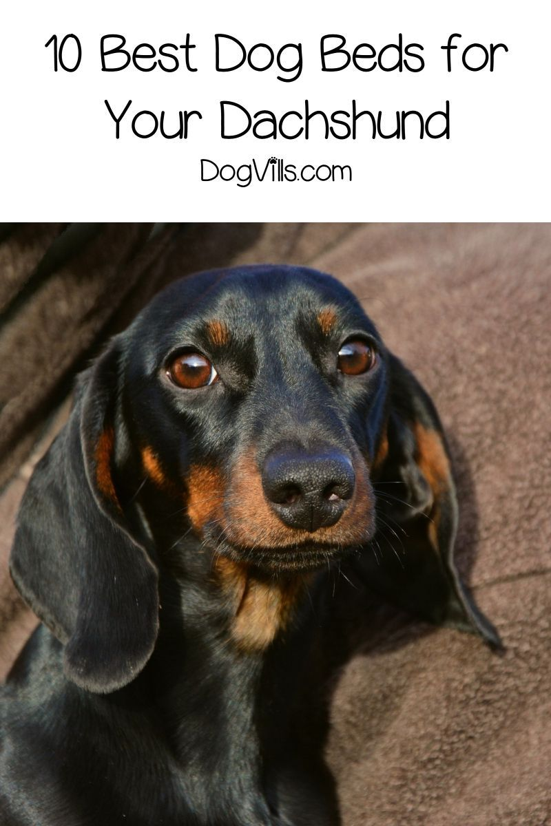 Dog Training Chewing What Are The Best Dog Beds For Dachshunds