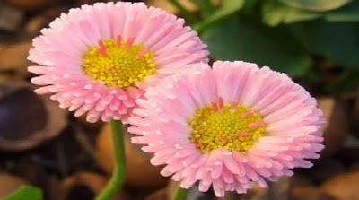 cara membuat bunga dari sedotan plastik 235a5b6336