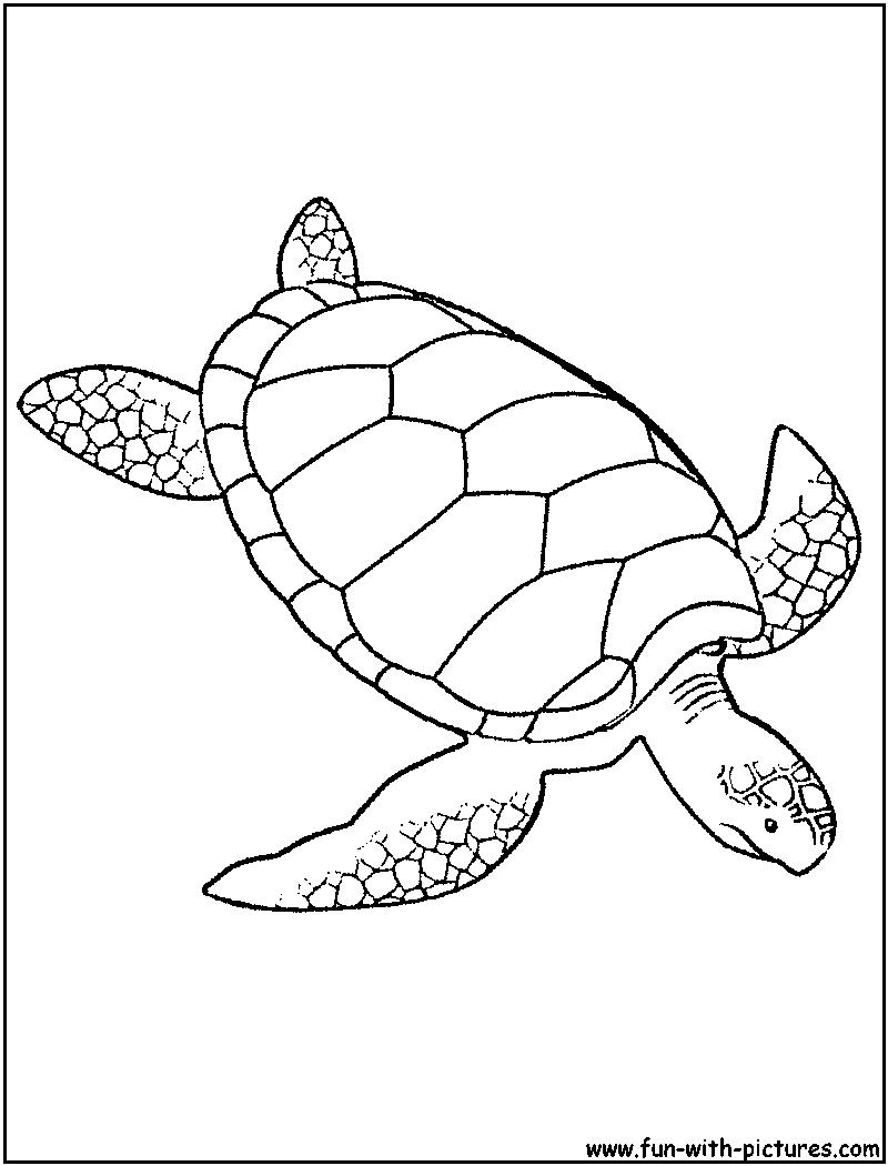 Green Sea Turtle Coloring Page Animals Loggerhead