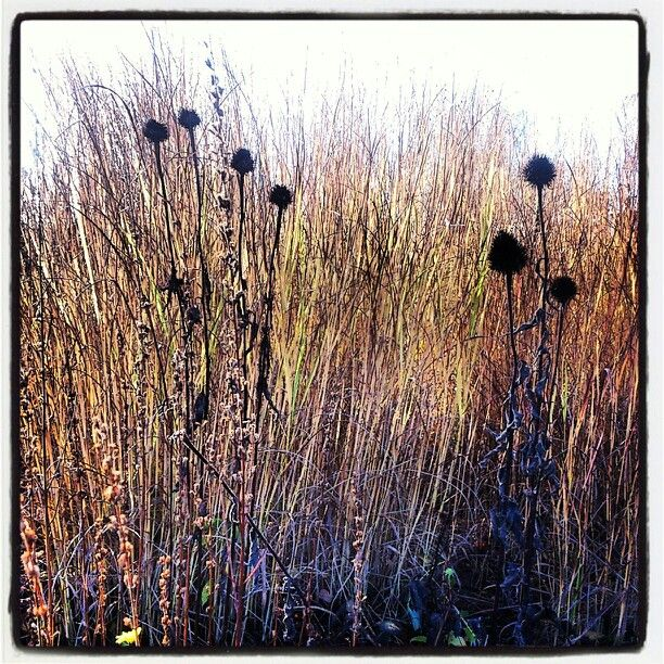 De fyra rstidernas park s lvesborg design piet oudolf for Pflanzengestaltung garten