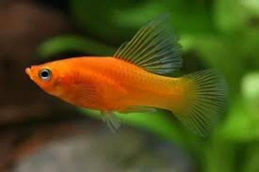 Best Pets Top 7 Fish For Children And Kids Pet Fishpod