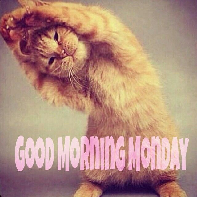 Good morning Monday (With images) | Monday morning images, Cute ...