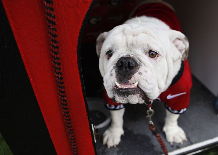 Uga Loves His Dawghouse At Sanford Stadium On The Campus Of The