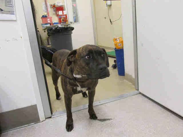 Tyga Is Stuck At Sonoma County Animal Shelter In Santa Rosa Ca Tyga Is In The Locked Up Back Area Being Held Over Her H Humane Society Animal Shelter Animals