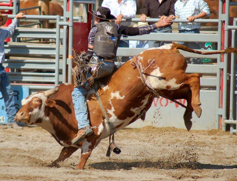 Pin On Ride Em Cowboy