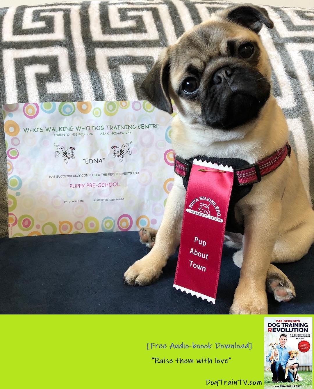 When I Was Awarded A Ribbon And Certificate For Passing Puppy Pre