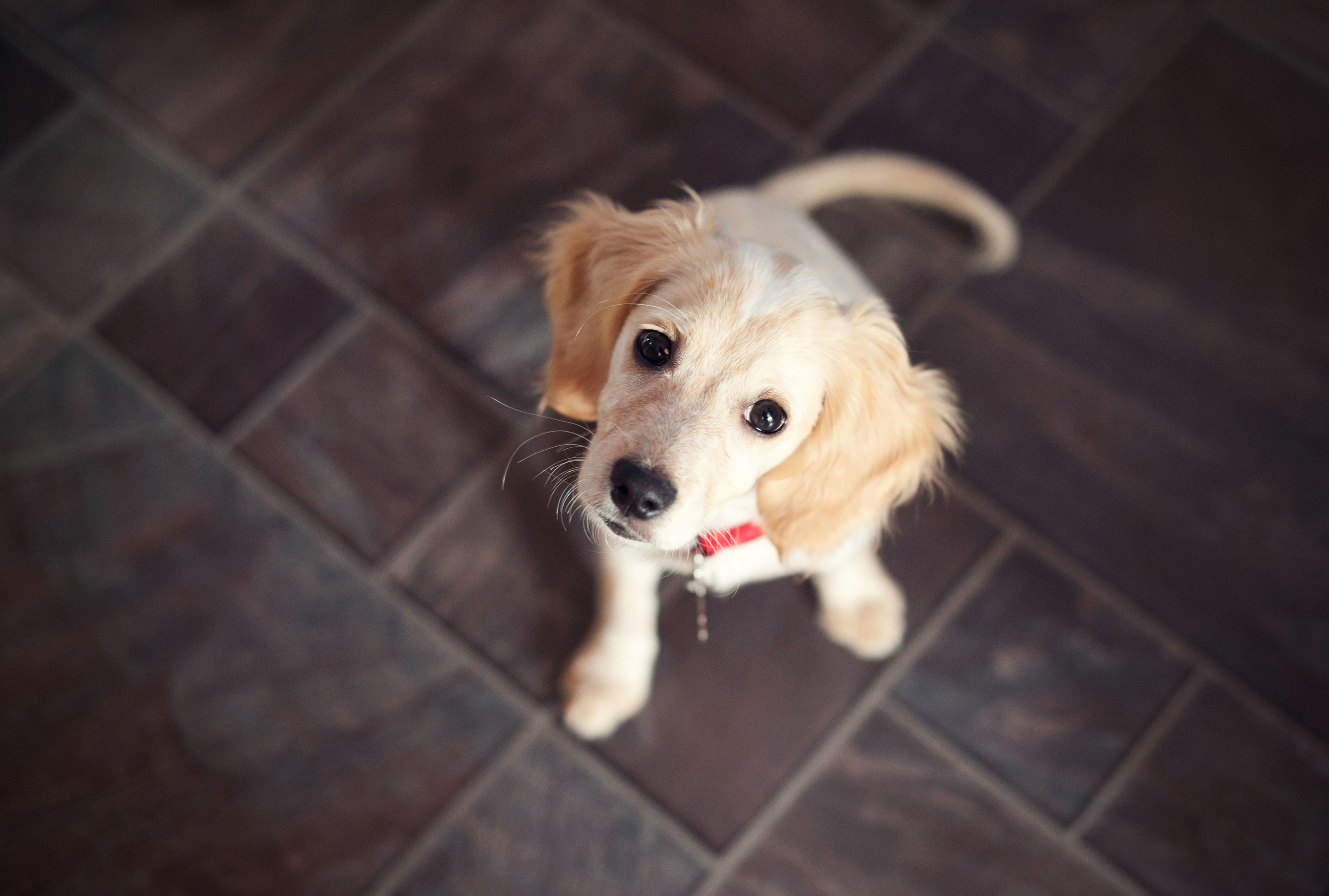 The Top Common Household Hazards To Dogs Cuteness Rescue Dogs