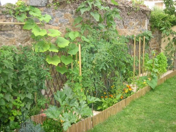 Potager contre un mur de pierre jardinage pinterest for Amenagement potager idees