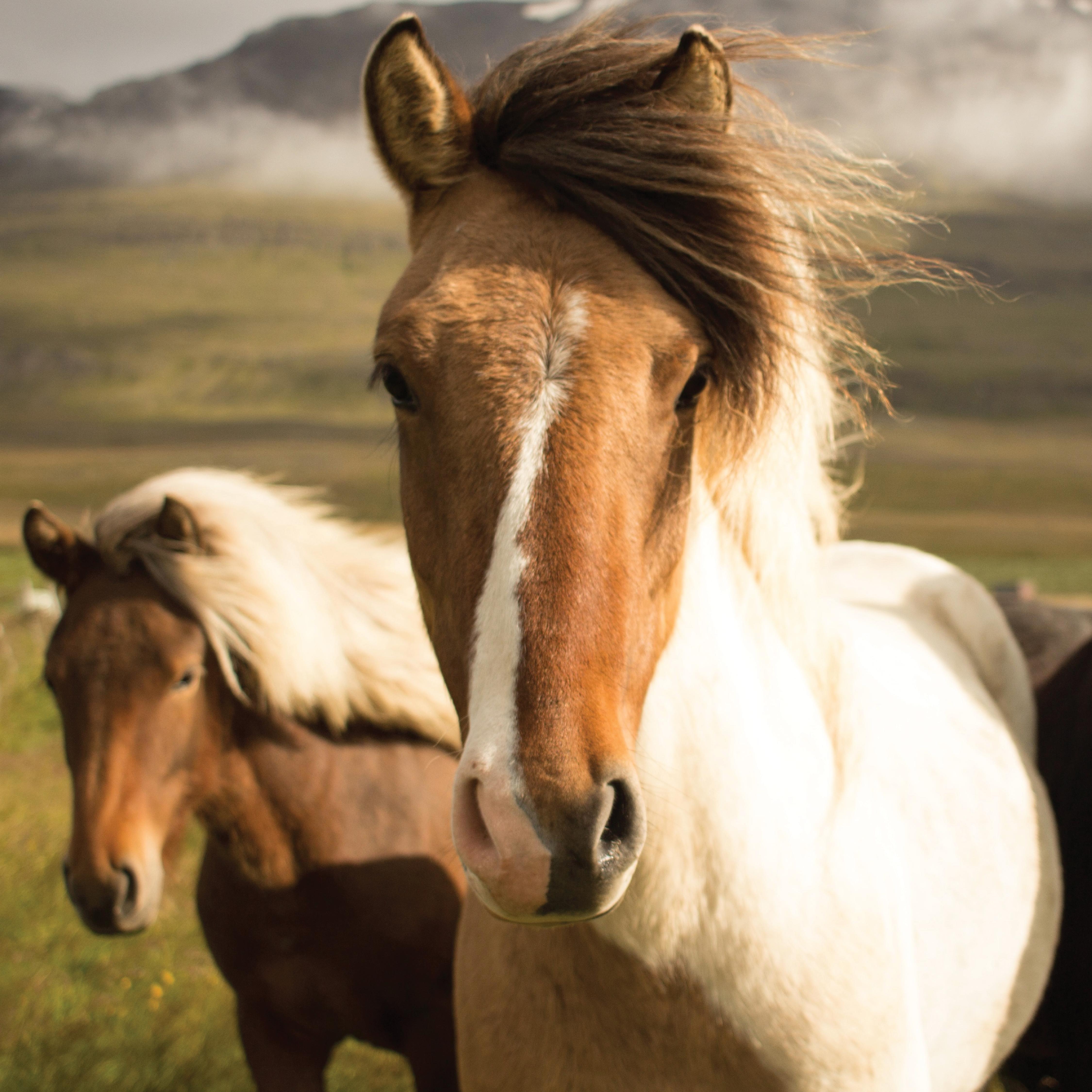 Best Wallpaper Horse Samsung Galaxy - f44f79fb42b52440390867445b2326b8  Pic_89374.png