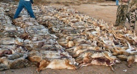 Petition · STOP the February 2016 Holbrook AZ Coyote Killing Contest · Change.org