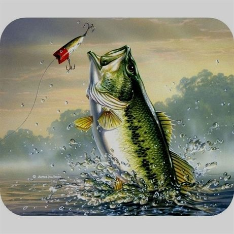 How to Fish for Bass - Beginner Bass Fishing Guide ...