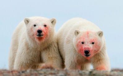 Wrangelov ostrov leží v Severnom ľadovom oceáne približne 150 km od severovýchodného pobrežia Ruska. Dĺžka ostrova je 125 km, okrem toho má najväčšiu populáciu mroža tichomorského.