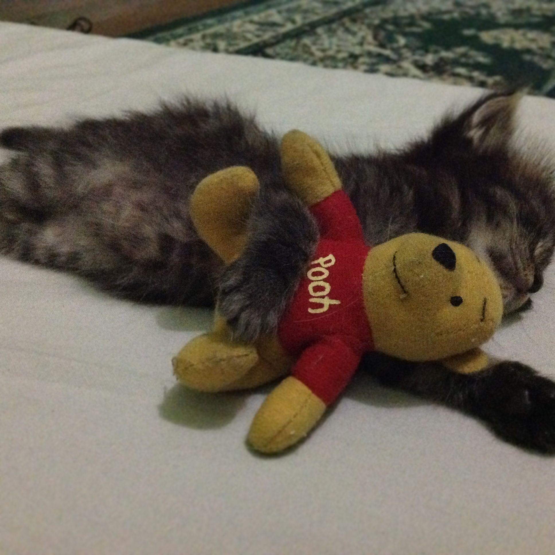 My bestfriend pooh
