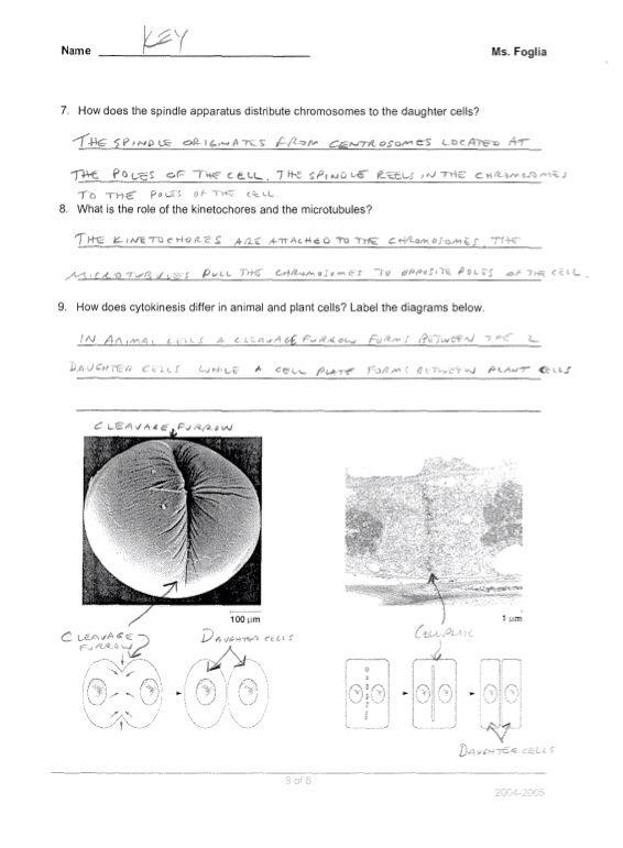 Reading And Study Workbook Biology Answer Key