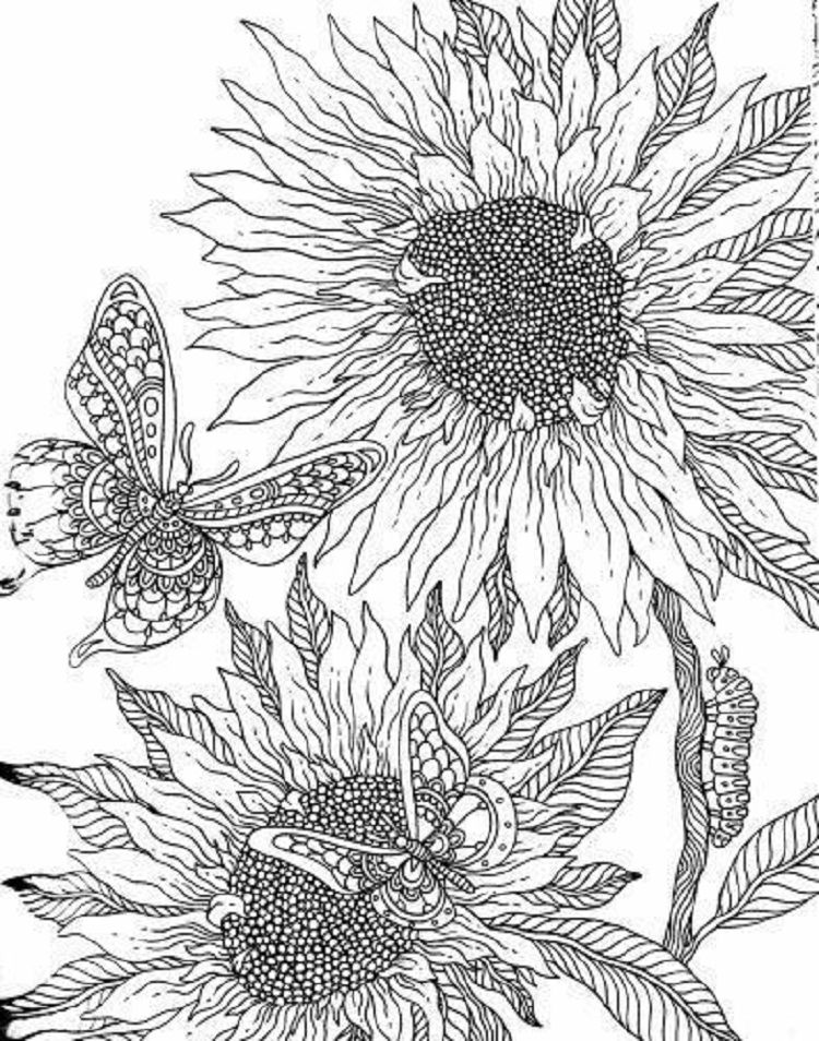 Free Printable Sunflower Coloring Pages Check More At Http