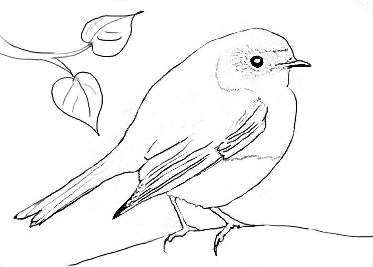 Malvorlage Vogel Kostenlos Aiquruguay