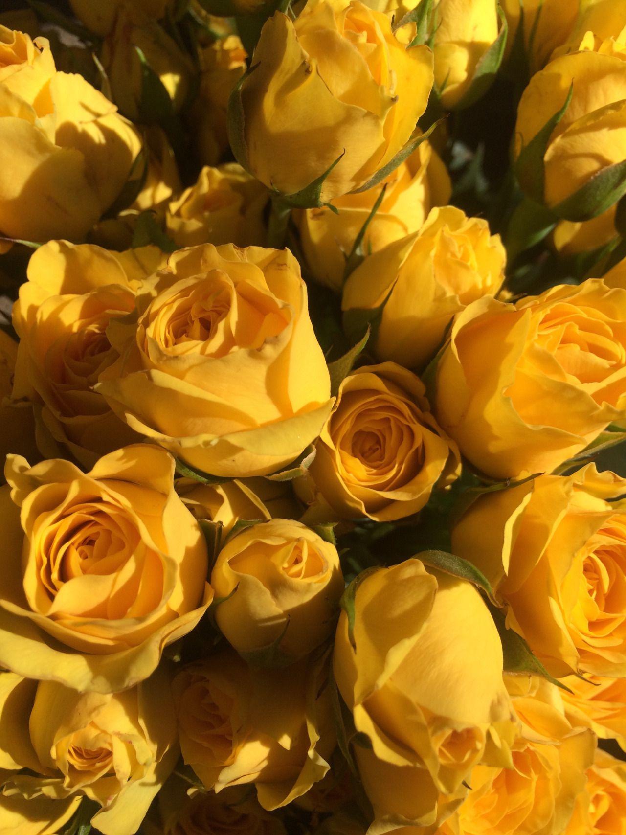 flowers Tumblr Yellow aesthetic, Yellow roses, Yellow