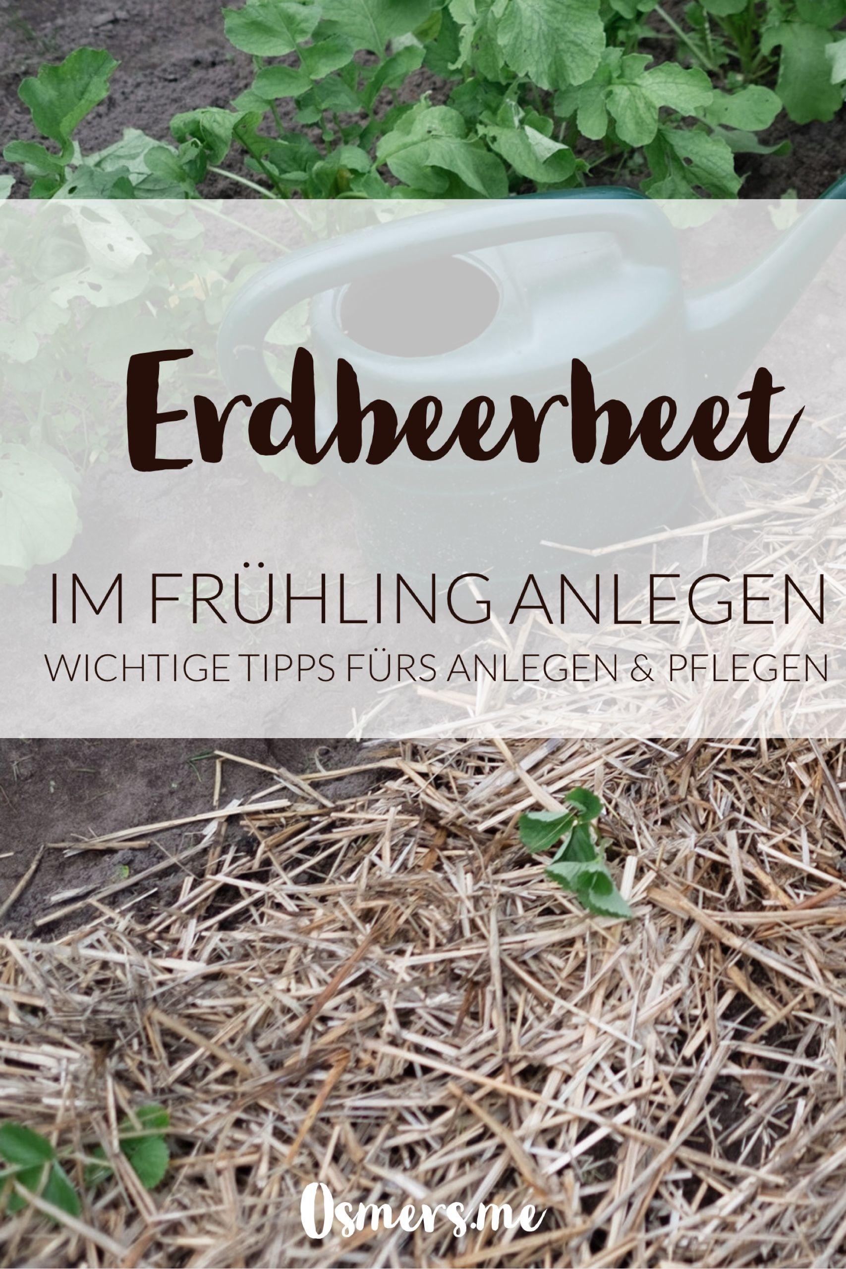 Neues Erdbeerbeet Anlegen Osmers Garten Erdbeerbeet Erdbeeren Gartnerei