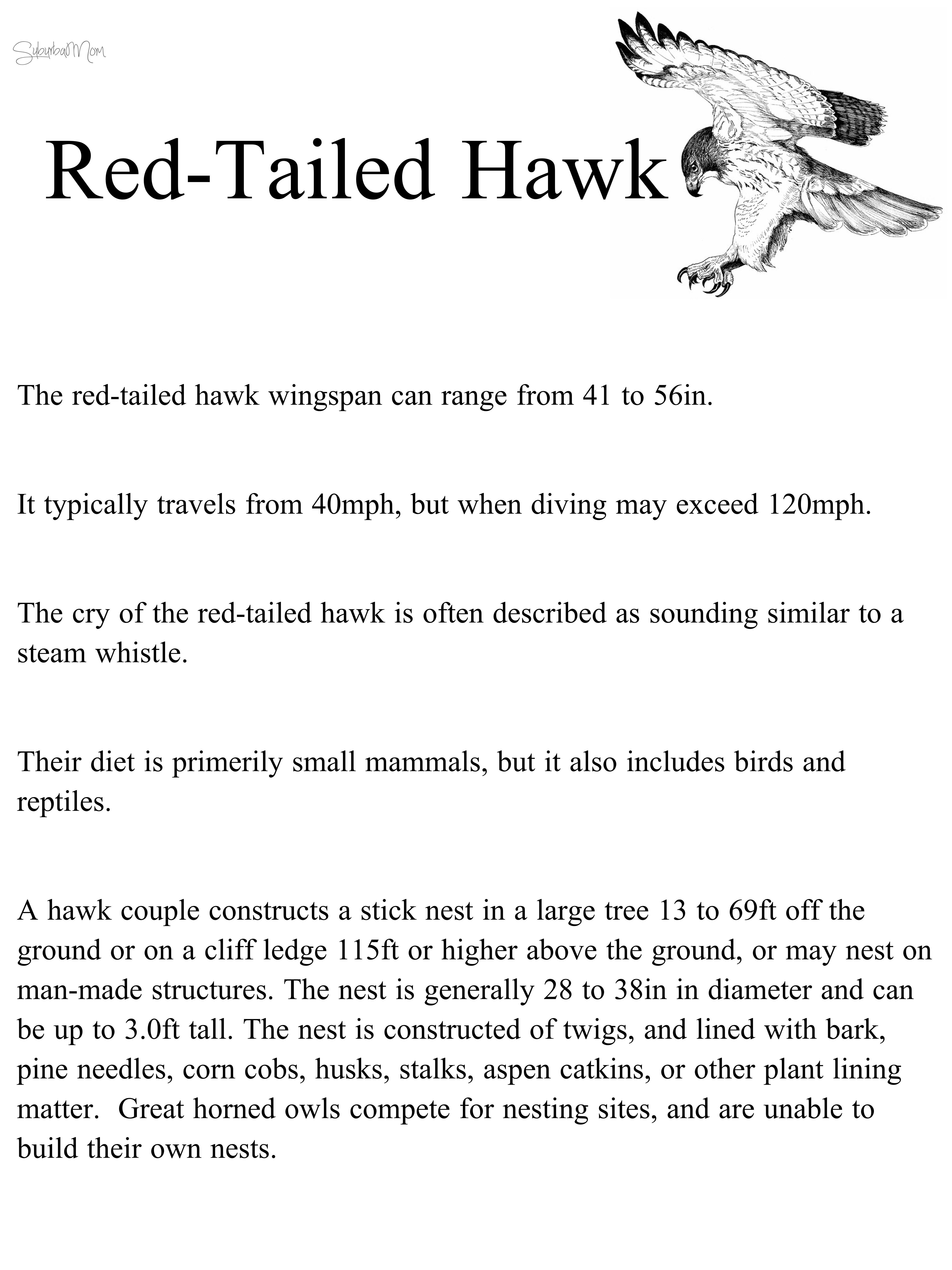 Hawk Red Tailed Hawk Habitat Science Natural Science