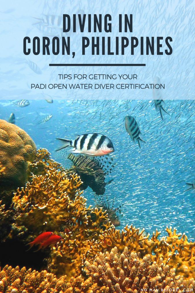 Diving In Coron Philippines Plus Tips For Getting Your Padi Open