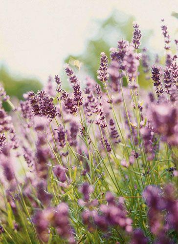Lila Blumen Und Pflanzen
