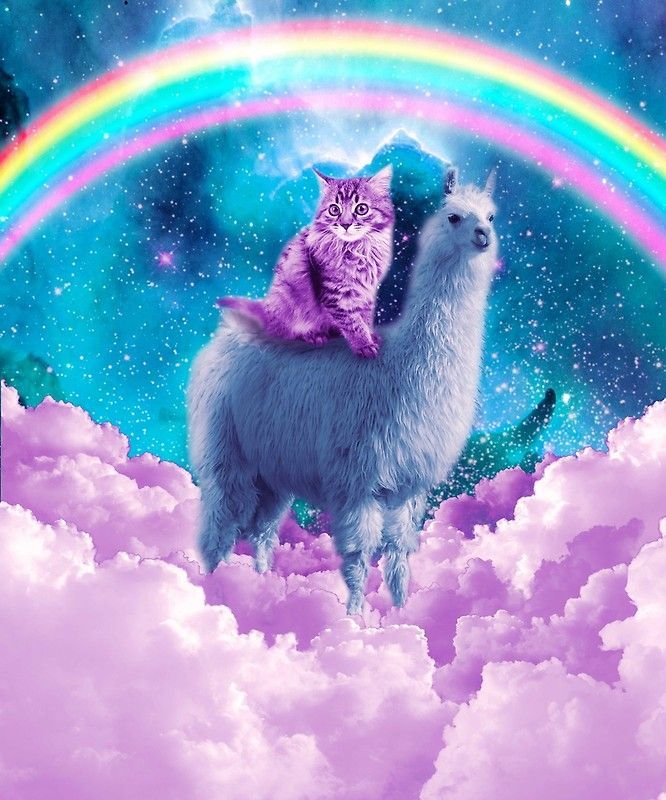 Rainbow Llama Cat Llama Poster in 2020 Trippy cat