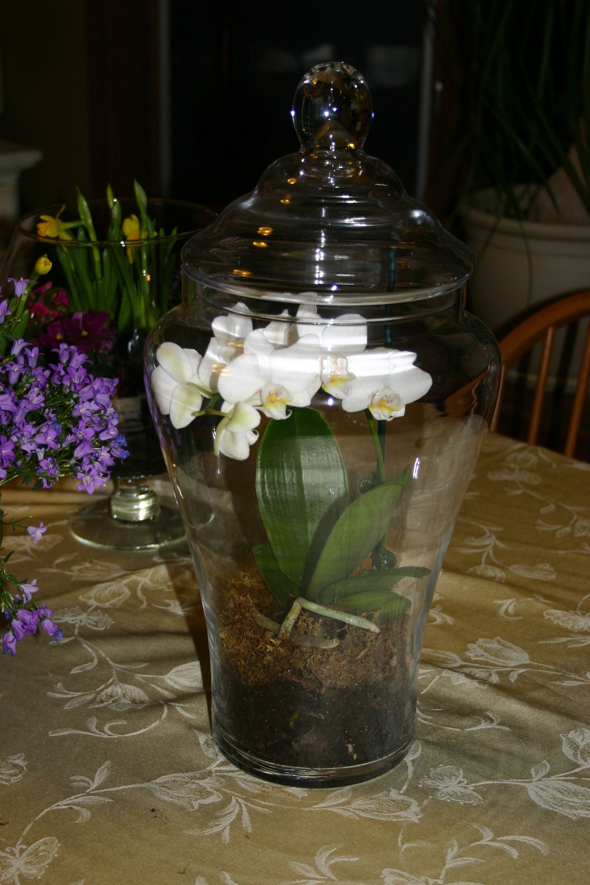 Enclosed Terrarium Idea For Orchids Via Repin Botanical Orchid